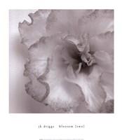Blossom [Two] Fine Art Print