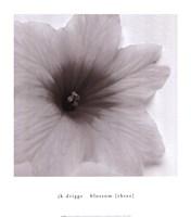 Blossom [Three] Fine Art Print