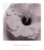 Blossom [Four] Fine Art Print