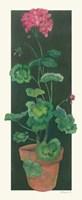 Geranium I Fine Art Print