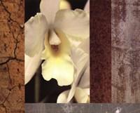 Tropical Whites I Framed Print