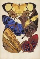 Collection IV Fine Art Print
