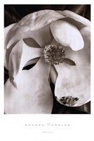 "Magnolia No. 3 by Sondra Wampler - 24"" x 36"""