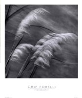 """Grasses In The Sky by Chip Forelli - 14"""" x 16"""""""