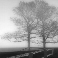 Seaside Tree Fine Art Print
