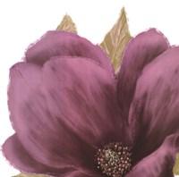 Grandiflora Blush II Framed Print