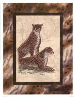 Cheetahs Fine Art Print