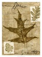 Leaf Collage II Fine Art Print