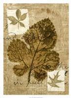 Leaf Collage IV Fine Art Print