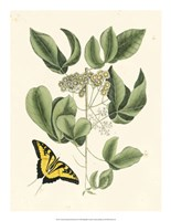Butterfly and Botanical II Fine Art Print