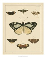 Heirloom Butterflies II Fine Art Print