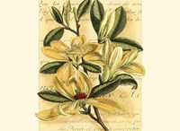 French Magnolia Framed Print