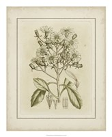 "Tinted Botanical I by Samuel Curtis - 18"" x 22"""