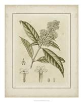 "Tinted Botanical II by Samuel Curtis - 18"" x 22"""