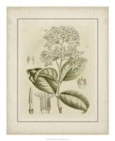 "Tinted Botanical III by Samuel Curtis - 18"" x 22"""