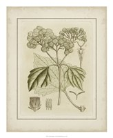 """Tinted Botanical IV by Samuel Curtis - 18"""" x 22"""""""