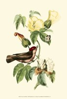 Cuvier Exotic Birds I Fine Art Print