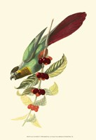 Cuvier Exotic Birds IV Fine Art Print