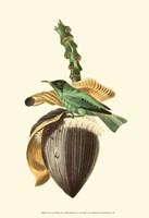 Cuvier Exotic Birds VIII Fine Art Print