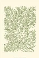 Mossy Branches I Fine Art Print