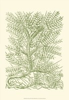 Mossy Branches III Fine Art Print