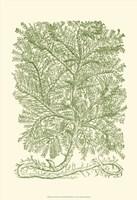 Mossy Branches IV Fine Art Print