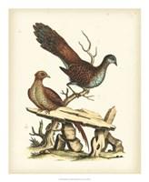 Regal Pheasants I Fine Art Print