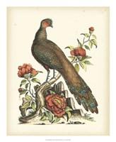 Regal Pheasants III Fine Art Print