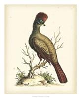 Regal Pheasants IV Fine Art Print