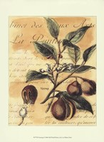 """Nutmeg by Walter H. Fitch - 13"""" x 10"""" - $10.49"""