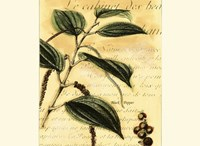 Black Pepper Fine Art Print