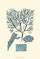 "Azure Seaweed II by Nerissa Harvey - 13"" x 19"" - $12.99"