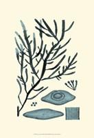 "Azure Seaweed III by Nerissa Harvey - 13"" x 19"" - $12.99"