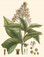 Crimson Botanical III Fine Art Print