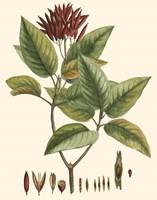 Crimson Botanical IV Fine Art Print