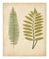 Cottage Ferns II Fine Art Print