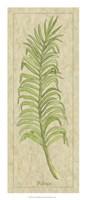 """Palmae Leaf by Alicia Ludwig - 12"""" x 28"""" - $22.49"""