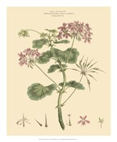 Blushing Pink Florals IV Fine Art Print