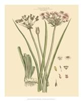 Blushing Pink Florals VIII Fine Art Print