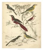 Avian Habitat IV Fine Art Print