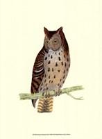 Mottled Owl Fine Art Print