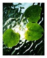 "Floating Star by Leonard Morris - 18"" x 22"", FulcrumGallery.com brand"