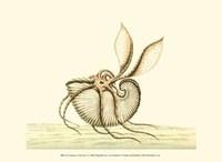 Creatures of the Sea V Fine Art Print