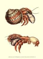 Hermit Crabs II Fine Art Print