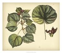 Antique Mangrove Tree Fine Art Print