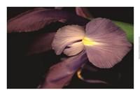 """Sweet Iris II by Renee Stramel - 22"""" x 15"""" - $22.49"""