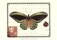 Butterfly Prose II Framed Print