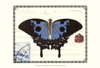 Butterfly Prose III Framed Print