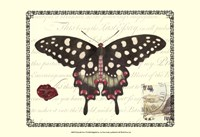 Butterfly Prose V Framed Print