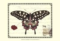 Butterfly Prose V Fine Art Print